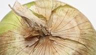 كيفية تجفيف البصل
