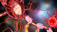 تركيب الجهاز العصبي