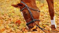 اسم حصان الرسول