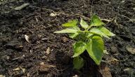 ما هي التربة