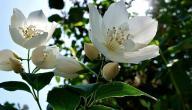 أجمل زهور في العالم