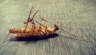 كيفية التخلص من الصراصير الصغيرة