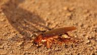 كيفية التخلص من الصراصير الصغيرة في المنزل