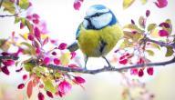 أجمل ما قيل عن فصل الربيع