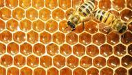 ما فائدة عسل النحل