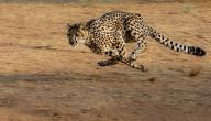 ما هو أسرع الحيوانات