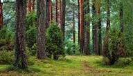 كيفية الحفاظ على الغابة
