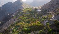 كم يبلغ ارتفاع الجبل الأخضر في عمان
