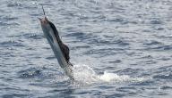 أسرع مخلوق في البحر