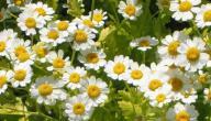 أعشاب ضد الالتهابات