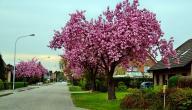 أجمل أنواع الأشجار