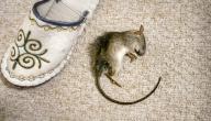 كيفية محاربة الفئران في المنزل