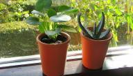 كيفية العنايه بالنباتات الداخلية