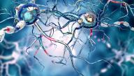 ما هو تصلب الأعصاب