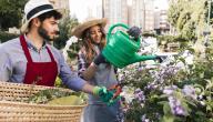 كيفية المحافظة على النباتات