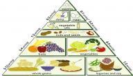 مما يتكون الهرم الغذائي