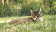 كيفية طرد القطط من حديقة المنزل