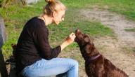 كيفية إطعام الكلاب