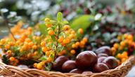 فوائد ثمرة النبق