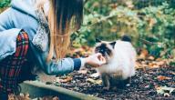 كيفية إطعام قطة صغيرة