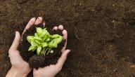 كيفية الحد من تلوث التربة
