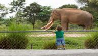 كيف نحمي الحيوانات المهددة بالانقراض
