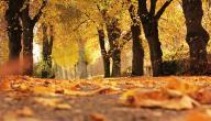 ما هي ظواهر فصل الخريف