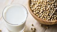 ما هي البروتينات التي تساعد على حرق الدهون