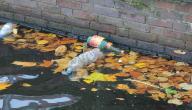 آثار التلوث المائي