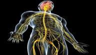 كيف نحمي جهازنا العصبي