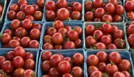 كيف أحفظ الطماطم