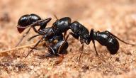 كيفية القضاء على النمل