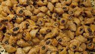 كيفية صناعة الحلويات الجزائرية