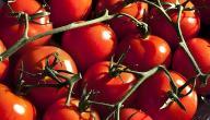 طريقة زراعة طماطم