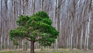 كيف نحمي الشجرة