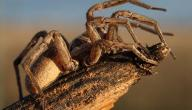 كم عدد ارجل العنكبوت