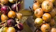 كيف احفظ البصل