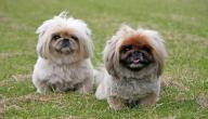 أنواع الكلاب وأسعارها