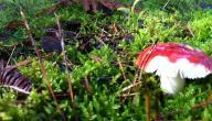 كيف تتم زراعة الفطر