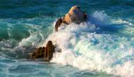 كيف يحدث المد والجزر