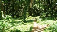كيف نحمي الغابة