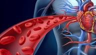 ما أهمية الدورة الدموية