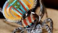 تعريف حشرة العنكبوت