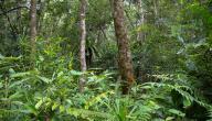ما أهمية الغابات المطرية