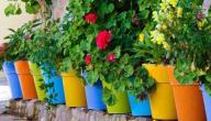 كيف أعتني بالنباتات المنزلية