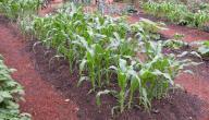 كيفية زراعة الخضروات في المنزل