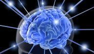 ما هو الغذاء الرئيسي للدماغ