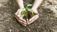 كيف تزرع الأشجار
