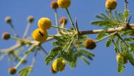 ما هي فوائد نبات القرض