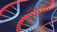 ما هو تحليل الجينات الوراثية